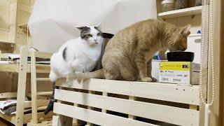 それでも一列に並ぶ猫