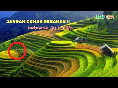 liburan-gak-harus-mahal!-yuk-kunjungi-7-sawah-terindah-di-indonesia