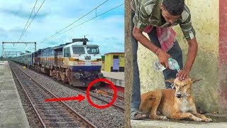 Humanity Exists!! Watch what happened after a dog hit by a very speedy Express train
