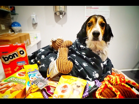 ABUSED DOG COVERED IN GIFTS AND TOYS FROM ALL OVER THE WORLD! . HAPPY TIMES!