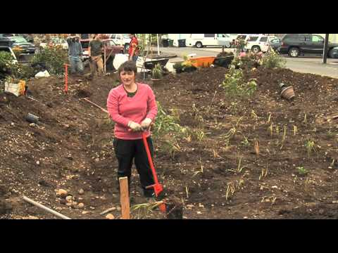 Building A Rain Garden In The Pacific Northwest Youtube