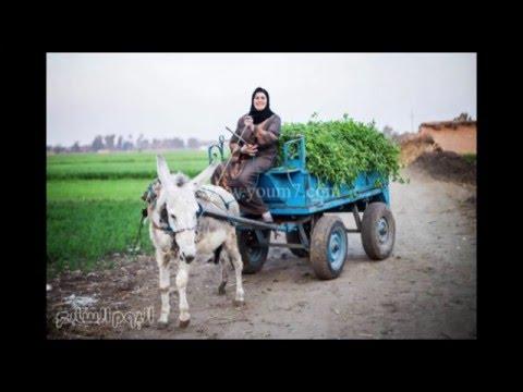 الريف المصري - اهل مصر الطيبين  Egyptian countryside - the good people of Egypt