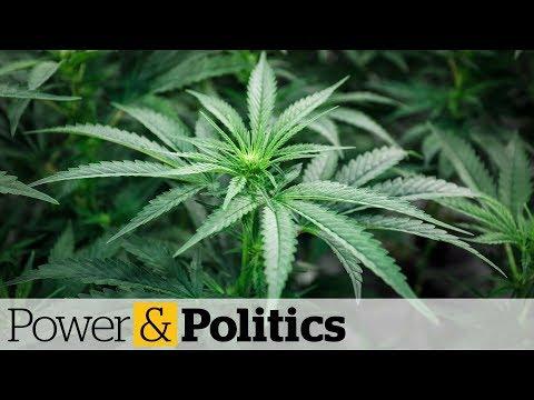 Canadians turned away at U.S. border for smoking pot, says Sask. mayor