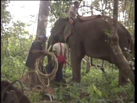 สารคดีส่องโลก  ตอน โพนช้าง 1