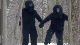 GAY BIGFOOT CAUGHT ON VIDEO -