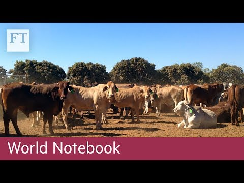 Rinehart bets on China's demand for beef | FT World Notebook