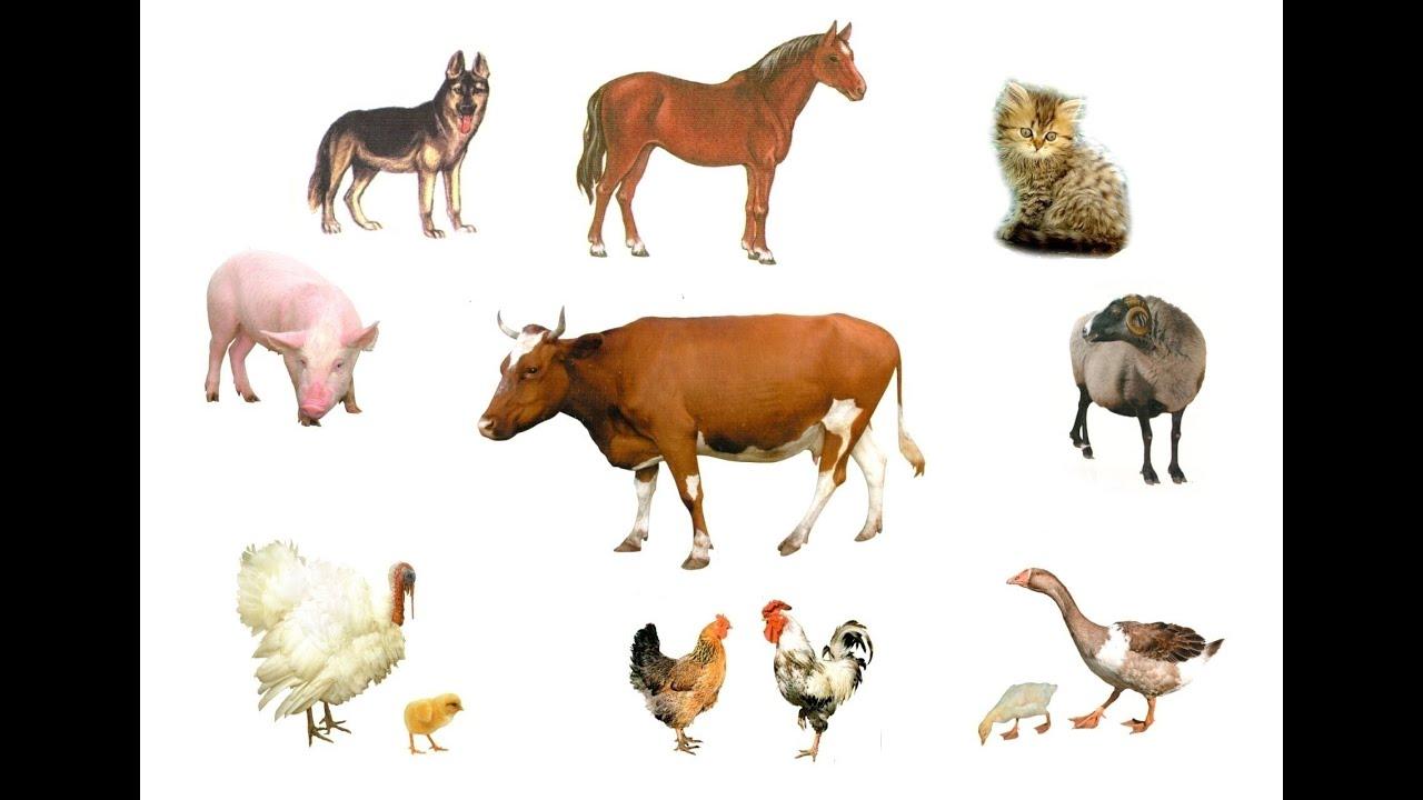 Домашние животные. Учим слова. Для детей 1-3 года ...