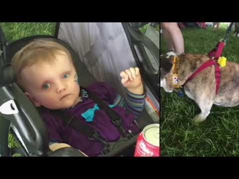 Rescue Ohio English Bulldogs
