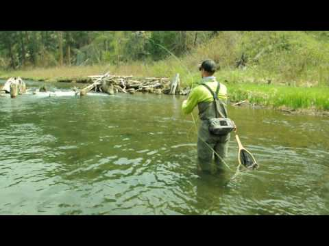 SoDak Fly Fishing - Black Hills