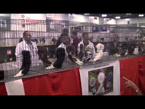 Barry Landau's Tropical Planet - National Pigeon Assoc. Show 2015