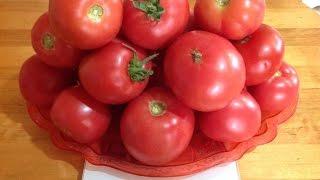 Проверенные сорта помидоров