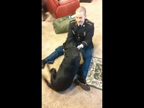Dog greets his soldier