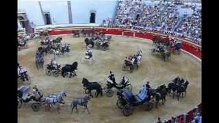 Exhibición de Enganches y Carruajes. 1 y 2 caballos. Plaza de Toros de Granada