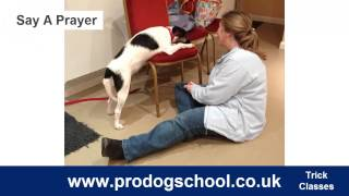Trick Training Classes - Pro Dog School - West Sussex, Uk