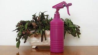 Insecticida Ecológico 1:  Manzanilla