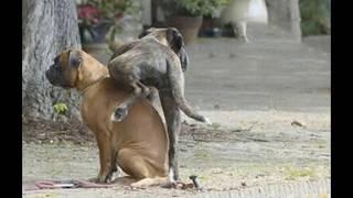 Прикольные и смешные фото безумных собак