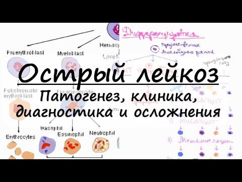 Острый лейкоз : патогенез, клинические проявления, гемограмма