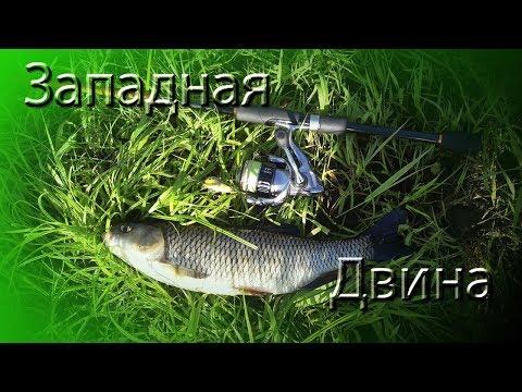 Западная Двина. В поисках голавля ч.1