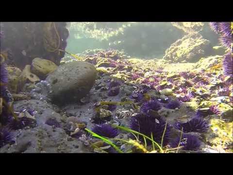 Intertidal Biome
