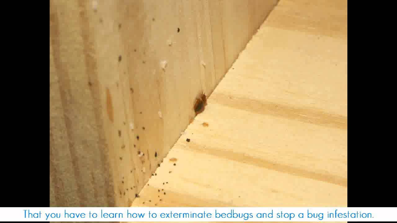 How big are bed bugs how to know if you have bed bugs for How do i prevent bed bugs