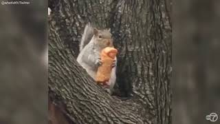 Meet Egg Roll Squirrel: New York City's newest mascot