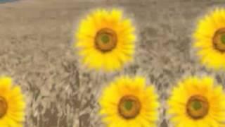 The Lemonheads-Brass buttons