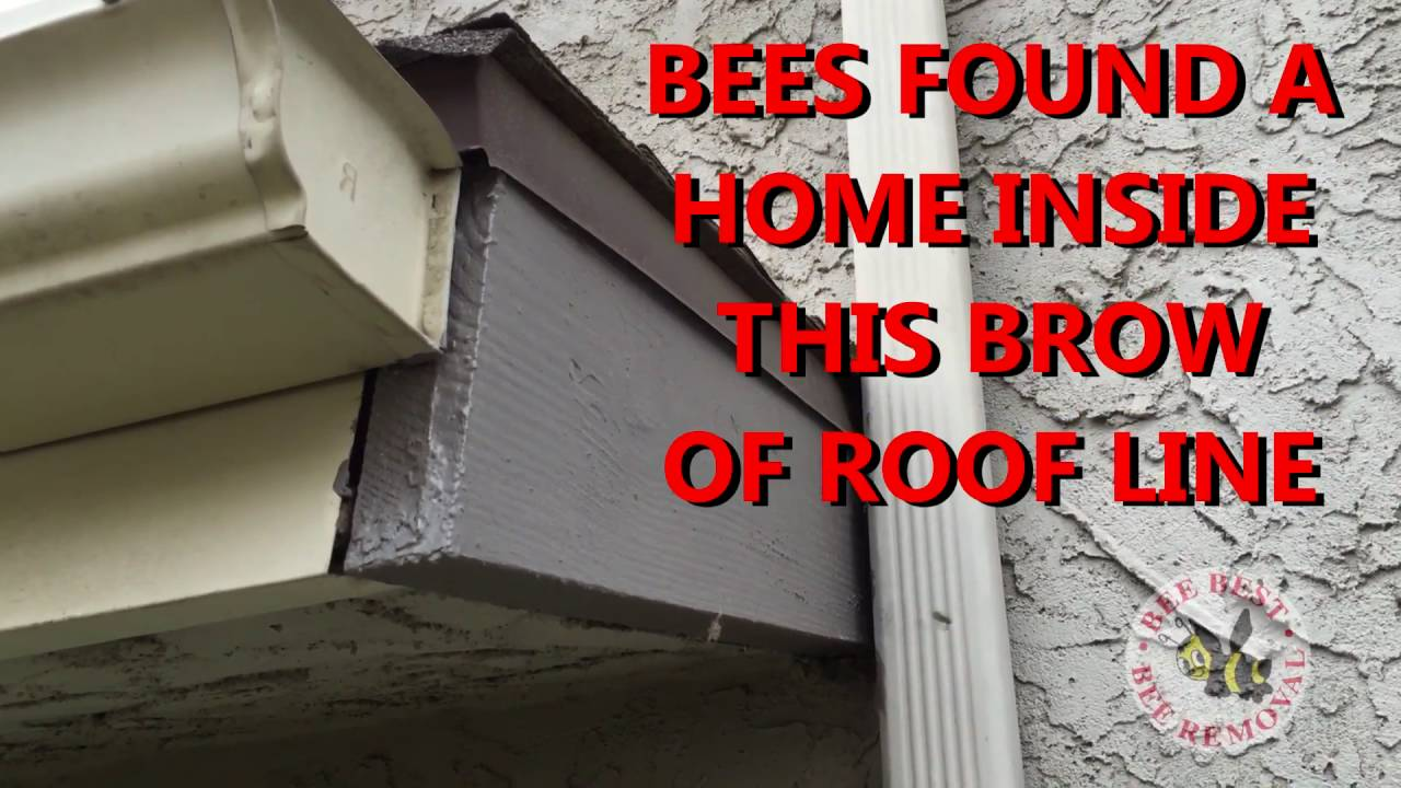 Quick Tips Bees Getting Into House From S In Roof Line