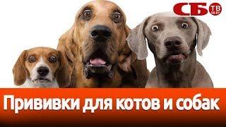 Анонс: Прививки для котов и собак – важная информация