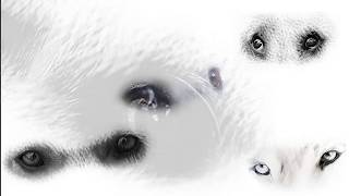 Приют собак Люберцы
