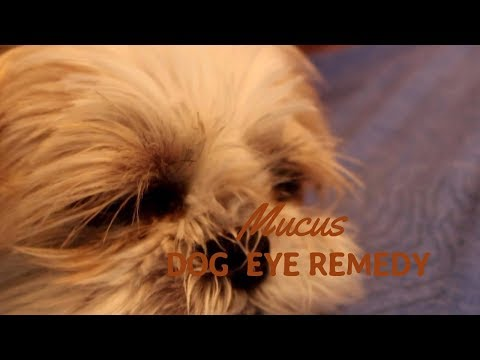 Dog Eye Mucus?  Holistic Answers