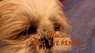 Dog Eye Mucus?  Holistic Answers thumbnail