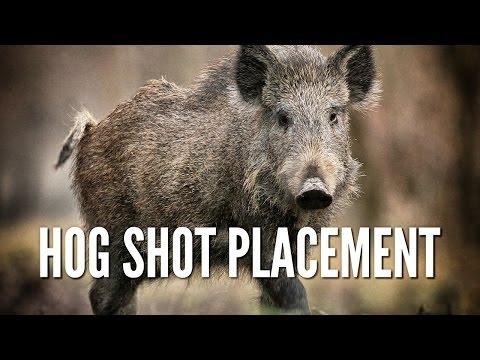 Wild Hog Shot Placement - Hog Anatomy
