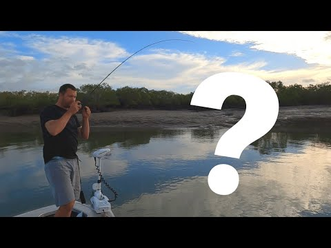 SURPRISE CATCH!.. Barramundi Fishing In South East Queensland.