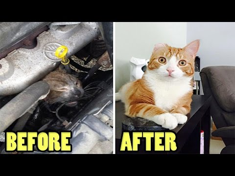 Rescued Cats Youtube