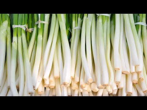 Eating Green Onions: Benefits and Nutrition Facts That You May not Know | Health And Nutrition