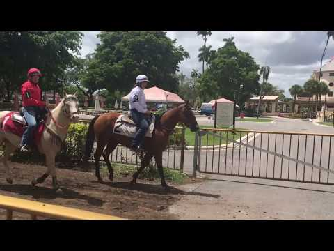 The Friday Show Presented By The 158th Queen's Plate: Hialeah Hope, Royal Attraction?
