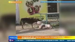 Бездомный пес освободил привязанную к забору собаку