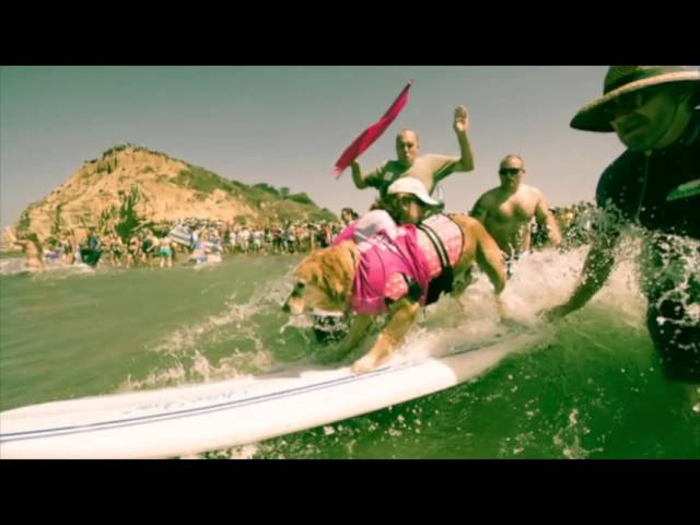 Behind the Scenes at the Helen Woodward 2013 Surf Dog Competition