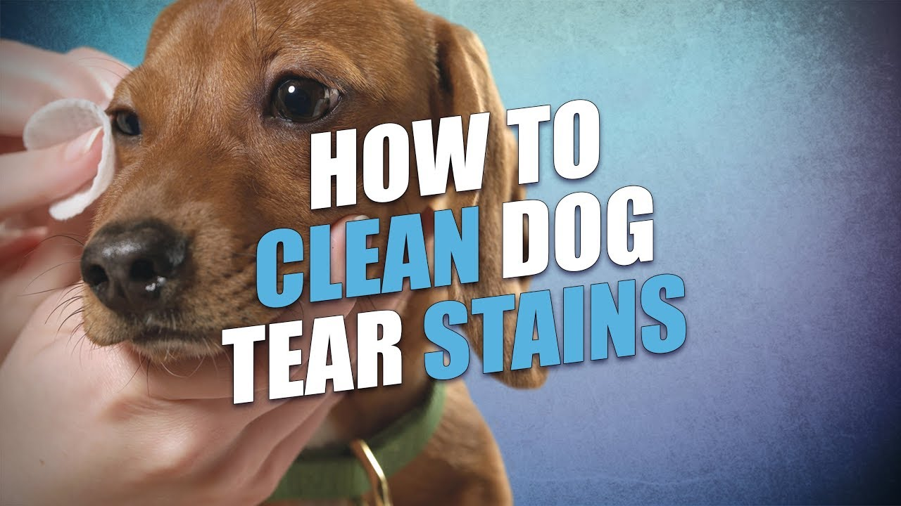 How to Remove Dog Tear Stains Naturally (Quick, Safe and Easy)