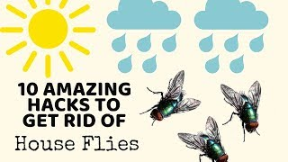 10 Cleaning Hacks to get rid of HOUSE FLIES in Monsoons - TESTED! | Non-Toxic ways