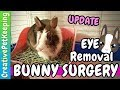 Bunny Eye Removal Surgery 🐰 Fighting the Tooth Infection