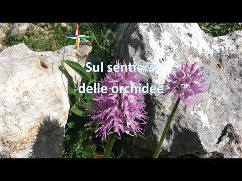 Trekking da monte Stella a piani di Rufo sul sentiero delle orchidee