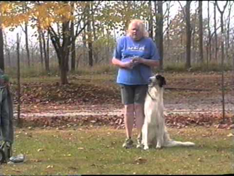Obedience Training Borzoi ('Games' & 'Rider')