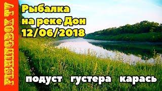 Рыбалка на фидер на реке Дон 12.06.2018. Рыбец, густера, карась