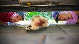 tentamos salvar um cachorrinho atropelad*...