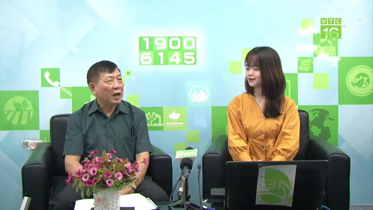 Cách chữa viêm ruột hoại tử trên gà   Tư vấn nông nghiệp trực tuyến 28/09/2020   VTC16