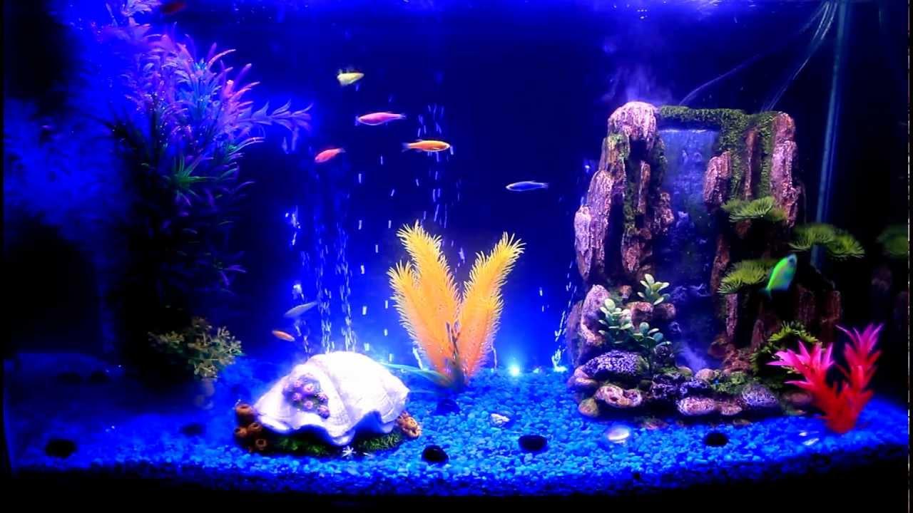 Glofish Tank GloFish Danios ...