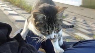 野良猫が無理矢理ひざに乗っかってきた結果www thumbnail