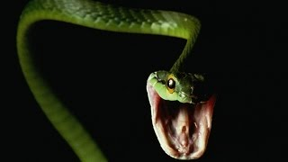 10 of the world's deadliest / most dangerous animals! (snakes, spiders, crocodiles and more!)