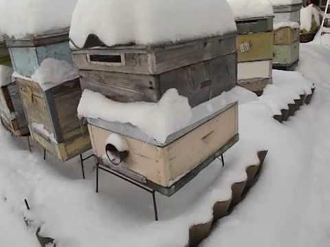 Дед мороз снежинки песня